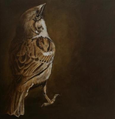 Brown-sparrow