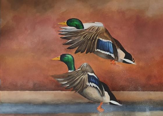 Twin-Ducks